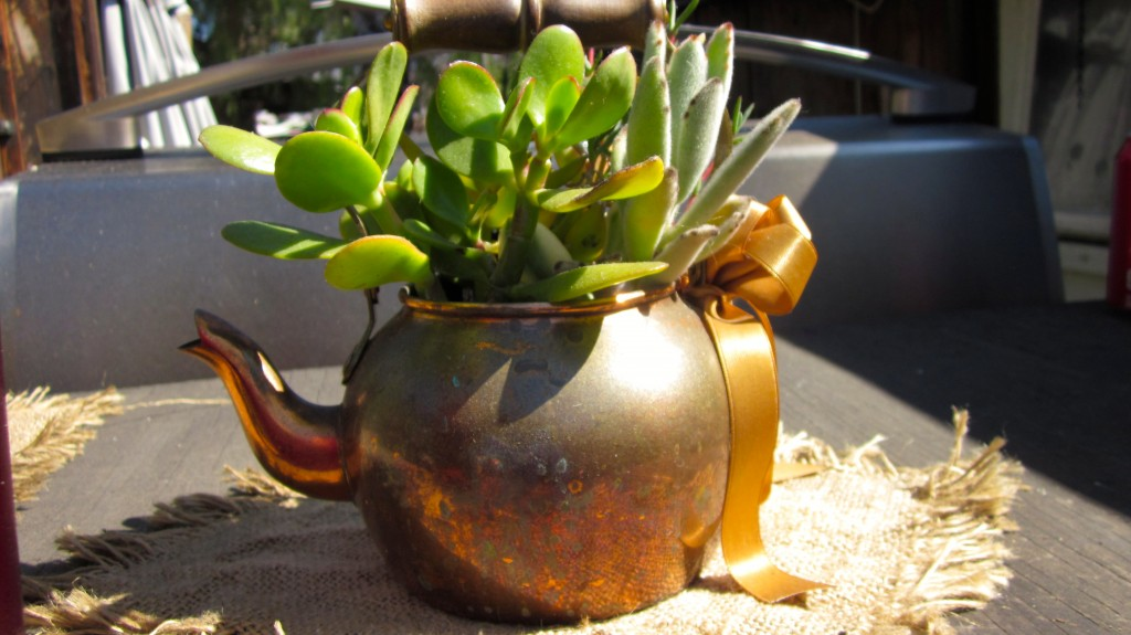 Cactus in a teapot Taken at the Hummingbird Cafe San Juan Capistrano CA